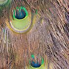 Peacock Eyes... by nellie11