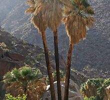 Desert Palms by heatherfriedman