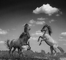 Wild Horses (2 of 2) by Henri Ton