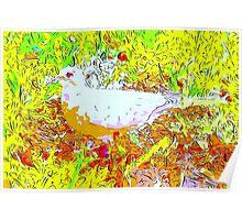 Dove in bright light Poster