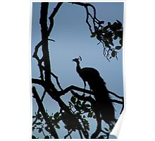 Silhouette of Peacock in Tree Ranthambore Poster