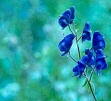 Monkshood by Eivor Kuchta