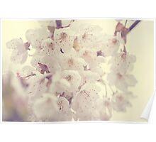 Hazy Blossom Poster