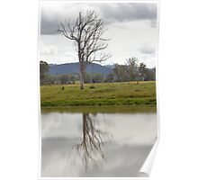 Reflection of a Gum Tree Poster