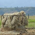 Hay Feeder by TheaShutterbug