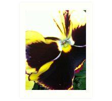 Pansy yellow Art Print