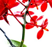 red orchid  Sticker