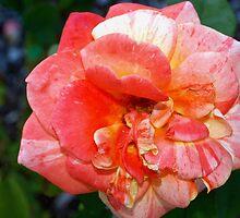 Peachy marbling  by ♥⊱ B. Randi Bailey