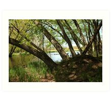 "White River Marsh ""Highlands"" 6778 Art Print"