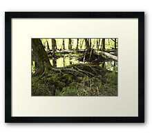 White River Marsh Landscape 6799 Framed Print
