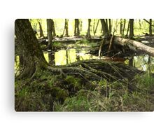 White River Marsh Landscape 6799 Canvas Print