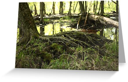 White River Marsh Landscape 6799 by Thomas Murphy
