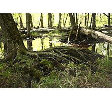 White River Marsh Landscape 6799 Photographic Print
