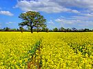 Mellow Yellow by Colin  Williams Photography