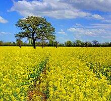 Mellow Yellow by Colin J Williams Photography