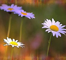 *Dreamy Daisies* by Darlene Lankford Honeycutt