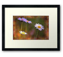 *Dreamy Daisies* Framed Print