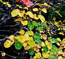 The Turning of the Fagus by TonyCrehan