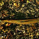 Hide OUt Trout by TroutMaGee