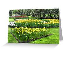 Golden Springtime - Keukenhof Gardens Greeting Card