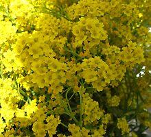 Crawling in yellows by MarianBendeth