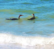 Cormorant conversation by ♥⊱ B. Randi Bailey