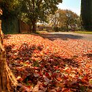 Autumn comes to town by Gideon van Zyl