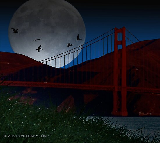 Pelicans over the Golden Gate by David Denny