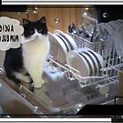 A Cats Work Is Never Done by judygal