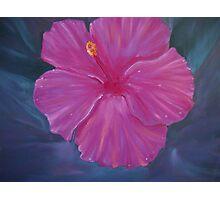 Hibyscus - floral Photographic Print