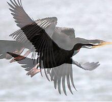Cormorant Fantasy by alycanon