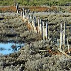 Scrubby Land Fence by Julie Sleeman