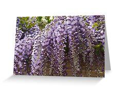 The stunning wisteria display. Greeting Card