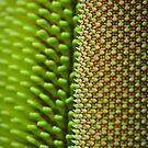 Banksia abstract by Cheryl Ribeiro