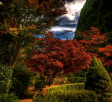 Withycombe Gardens - Mt Wilson - Tranquility by Brad Woodman