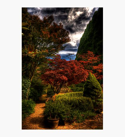 Withycombe Gardens - Mt Wilson - Tranquility Photographic Print