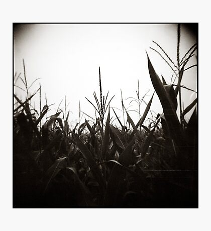 { field dreams } Photographic Print