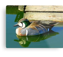 Do you think she will notice me? Metal Print