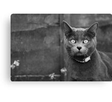 Russian Blue Canvas Print