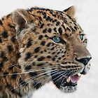 Amur Leopard by John Dickson