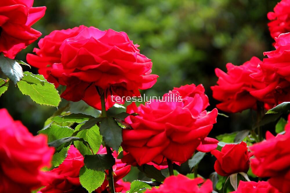 Olympiad Tree Roses by teresalynwillis