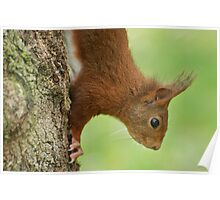 SQUIRREL DIARIES -IV- Poster