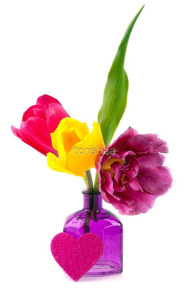 Colorful tulips  by torishaa