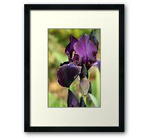 Tarheel Elf Iris Framed Print