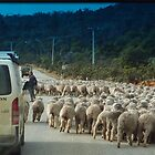 Moving Sheep by Bevellee