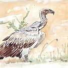White-backed Vulture by Maree Clarkson