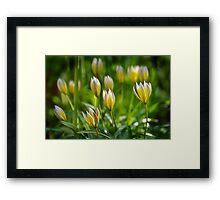 Wild Tulips Framed Print