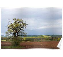 Spring tree in rural Devon Poster