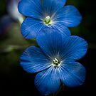 La vie en bleue! by Marie Moriscot