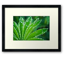 Day 298 - 3rd May 2012 Framed Print